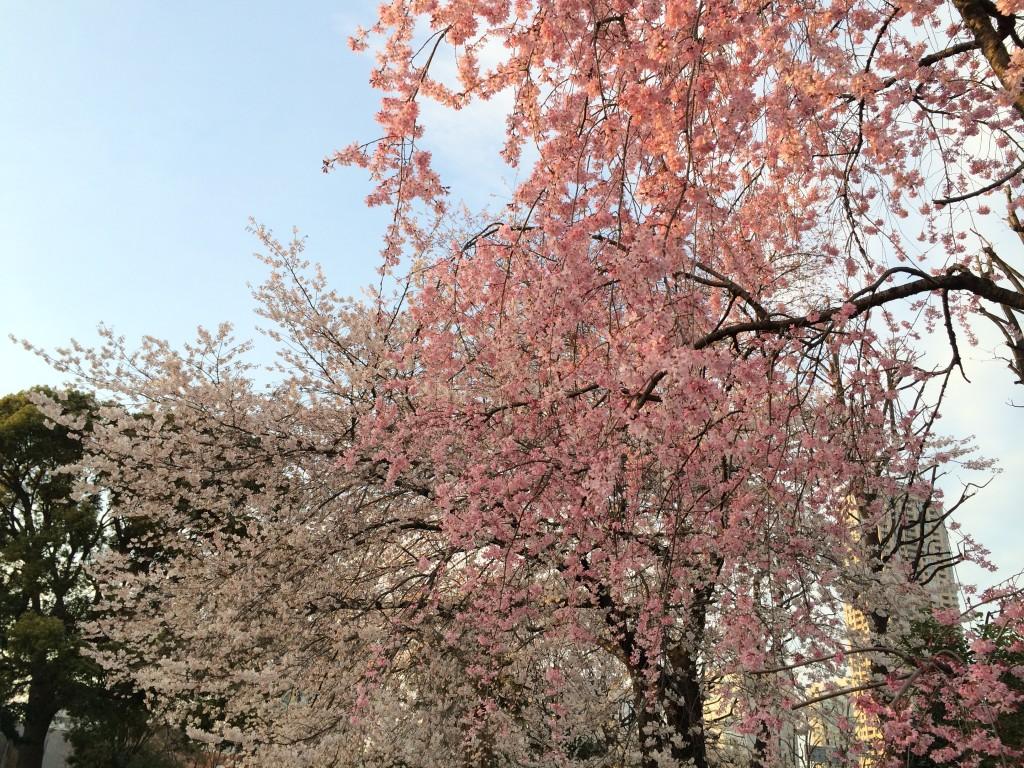 写真 2014-03-29 17 21 43